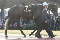 190327 桜花賞-08