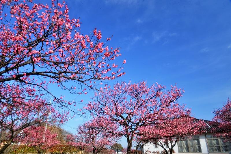 神埼梅園4