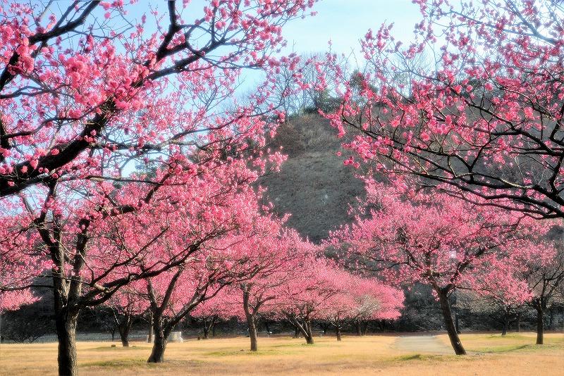 神埼梅園8