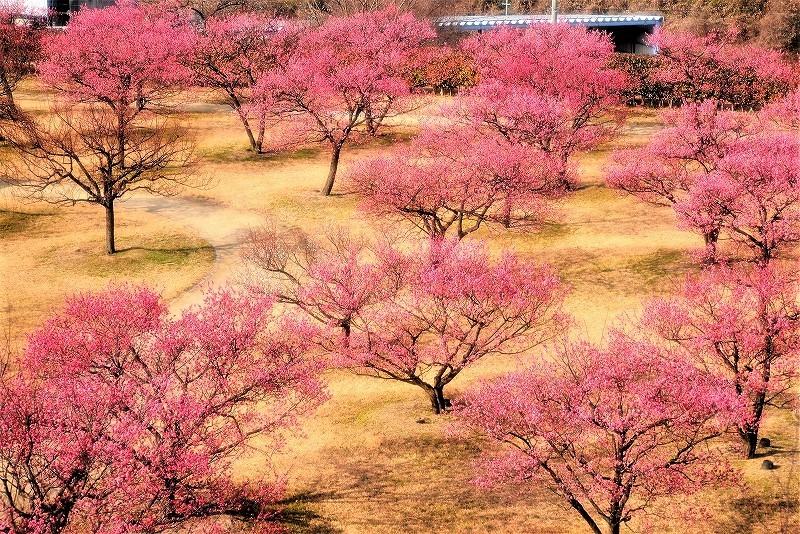 神埼梅園1