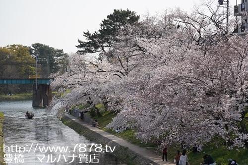 岡崎公園 2019 マルハナ質店