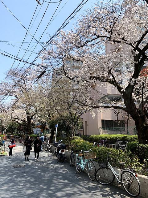 2019年東京桜3@2019年3月27日 by占いとか魔術とか所蔵画像