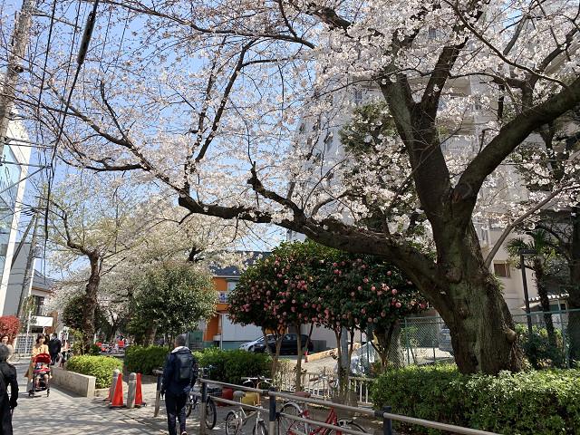 2019年東京桜4@2019年3月27日 by占いとか魔術とか所蔵画像
