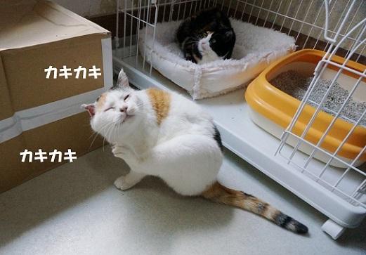 みやっち2