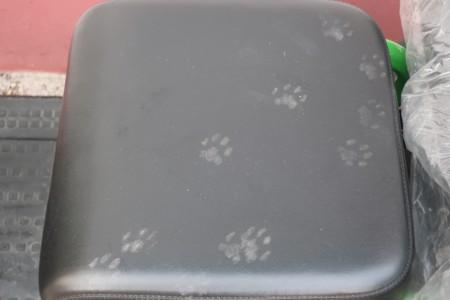 Cat foot print (10)