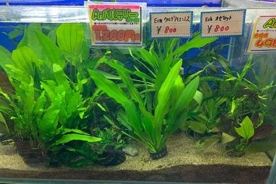 水草0227-2