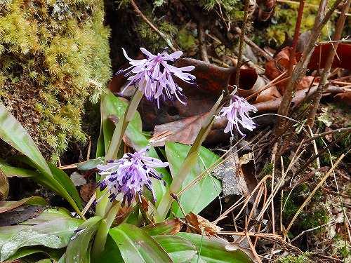 s-紫の花2010401