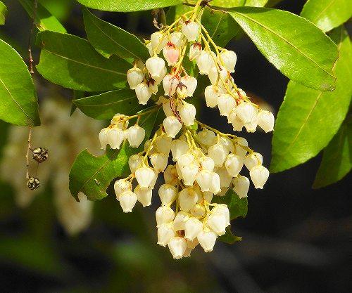 s-白い花20190401