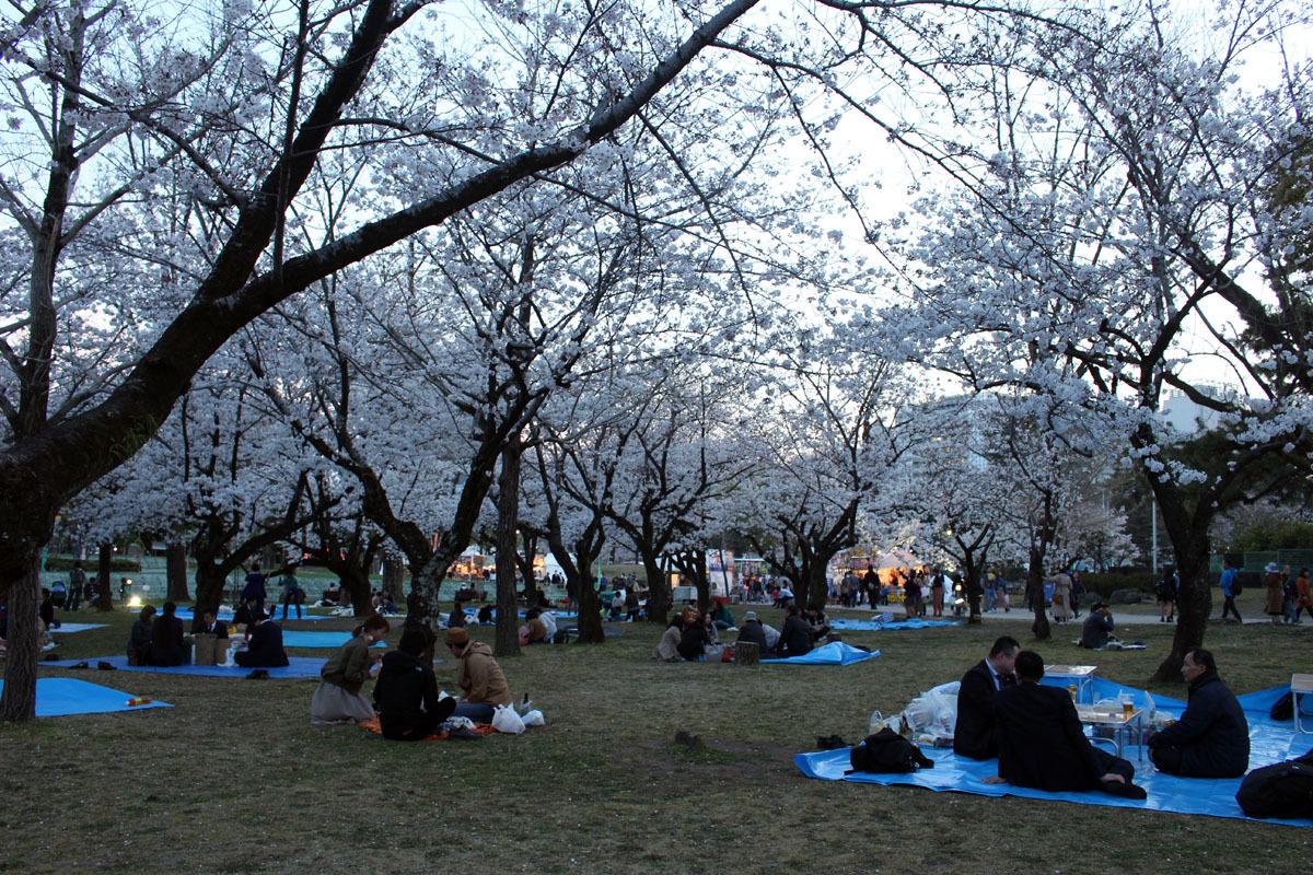 夜桜 ソメイヨシノ 駿府城公園 190405 b
