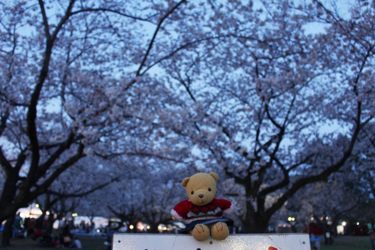 ソメイヨシノと 夜桜 駿府城公園 190405