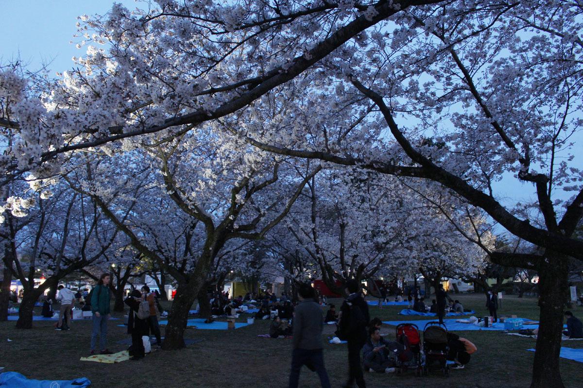 夜桜見物 駿府城公園 190405
