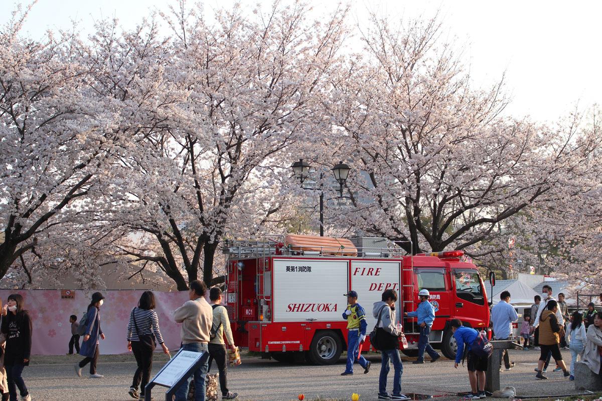 消防車とソメイヨシノ 駿府城公園 190406