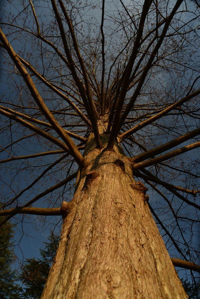 一本の樹-1