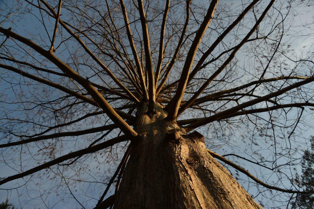 一本の樹-3
