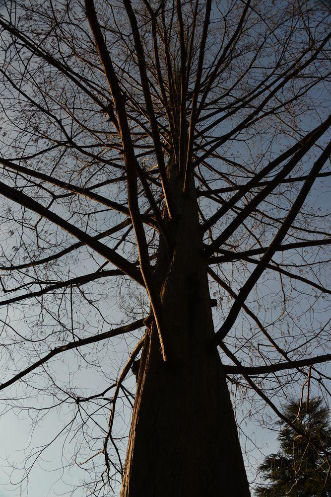 一本の樹-4