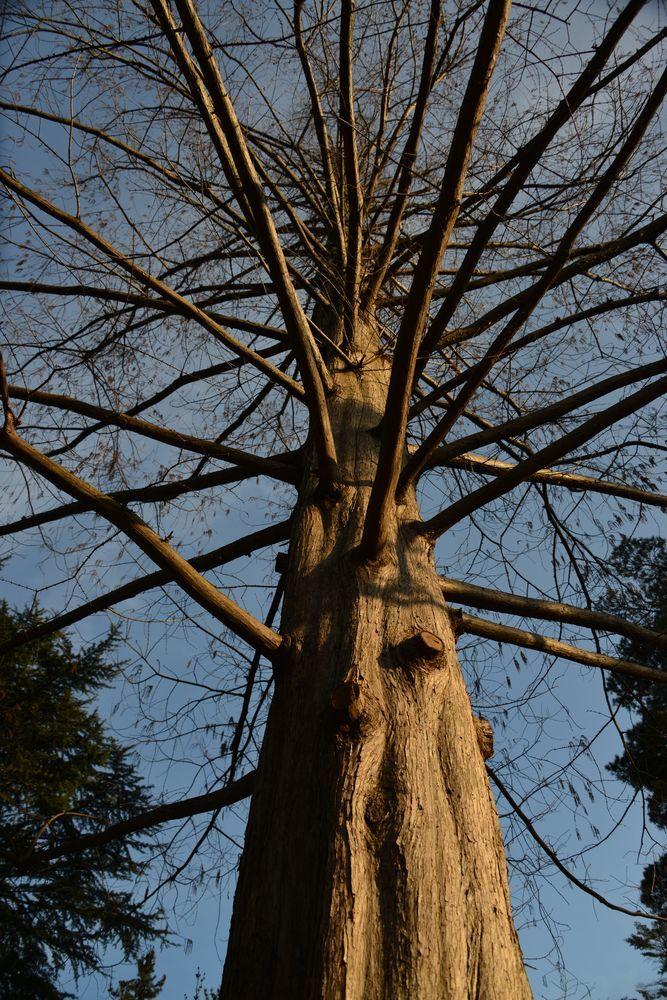 一本の樹-5