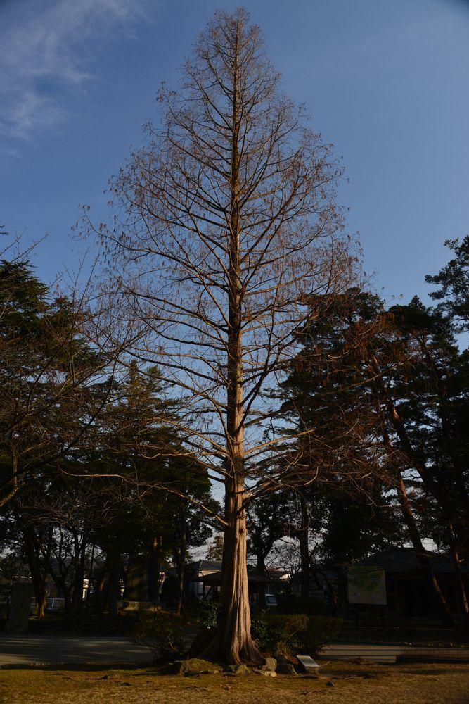 一本の樹-7