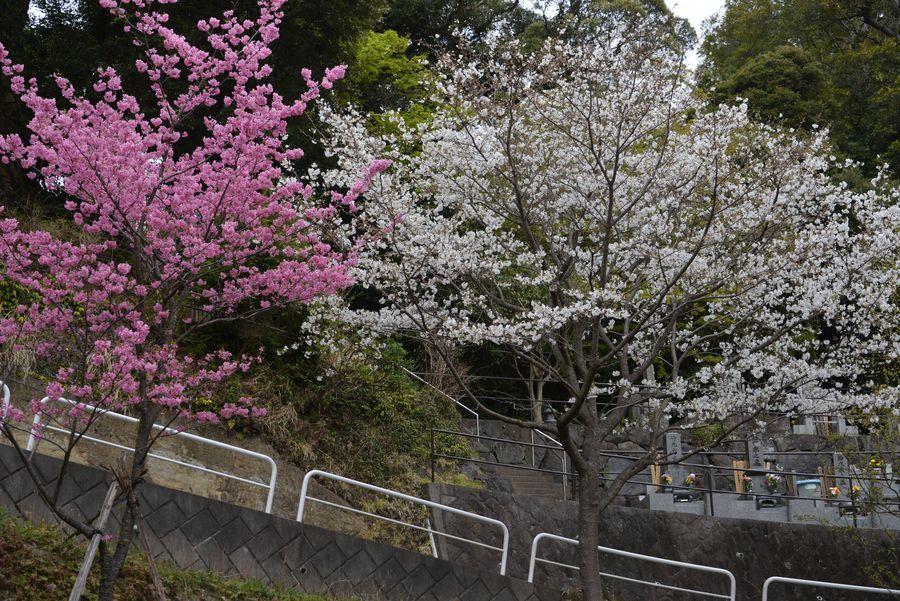 神武寺の花と-2