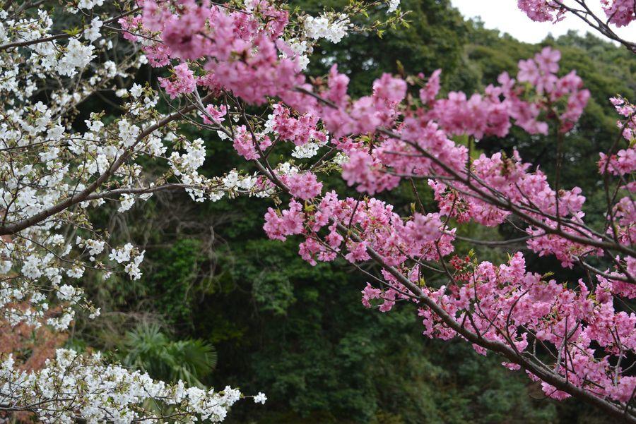 神武寺の花と-3