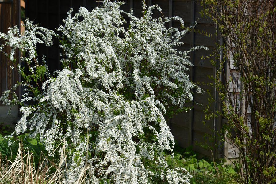 花の季節-1
