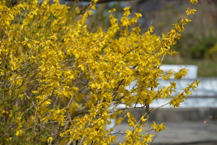 花の季節-2