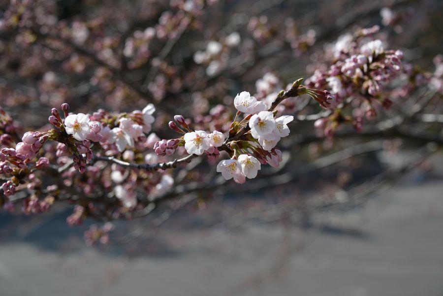 花の季節-8