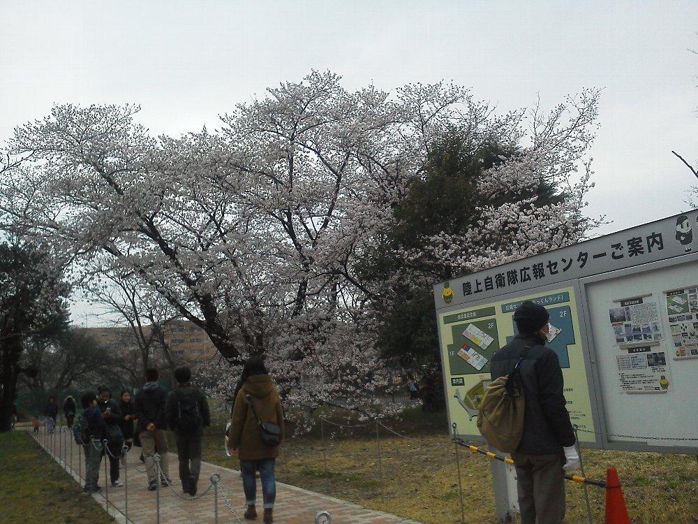 F1000096朝霞駐屯地観桜一般開放3月30日