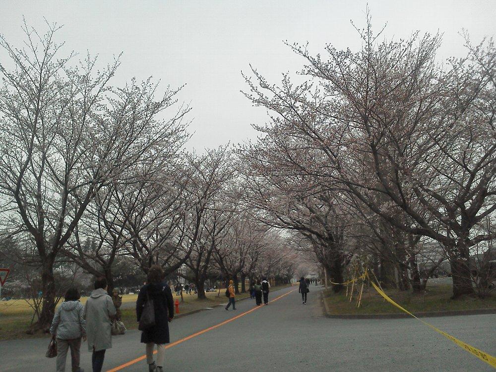 F1000093朝霞駐屯地観桜一般開放3月30日