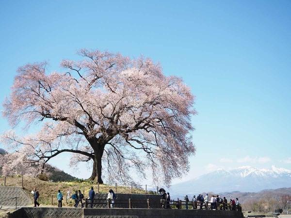 わに塚の桜_20190404