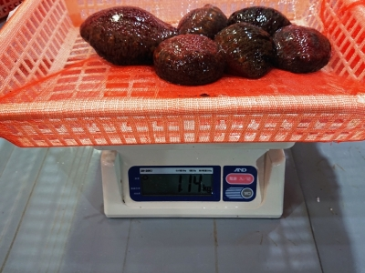 赤ナマコの重量(H31)