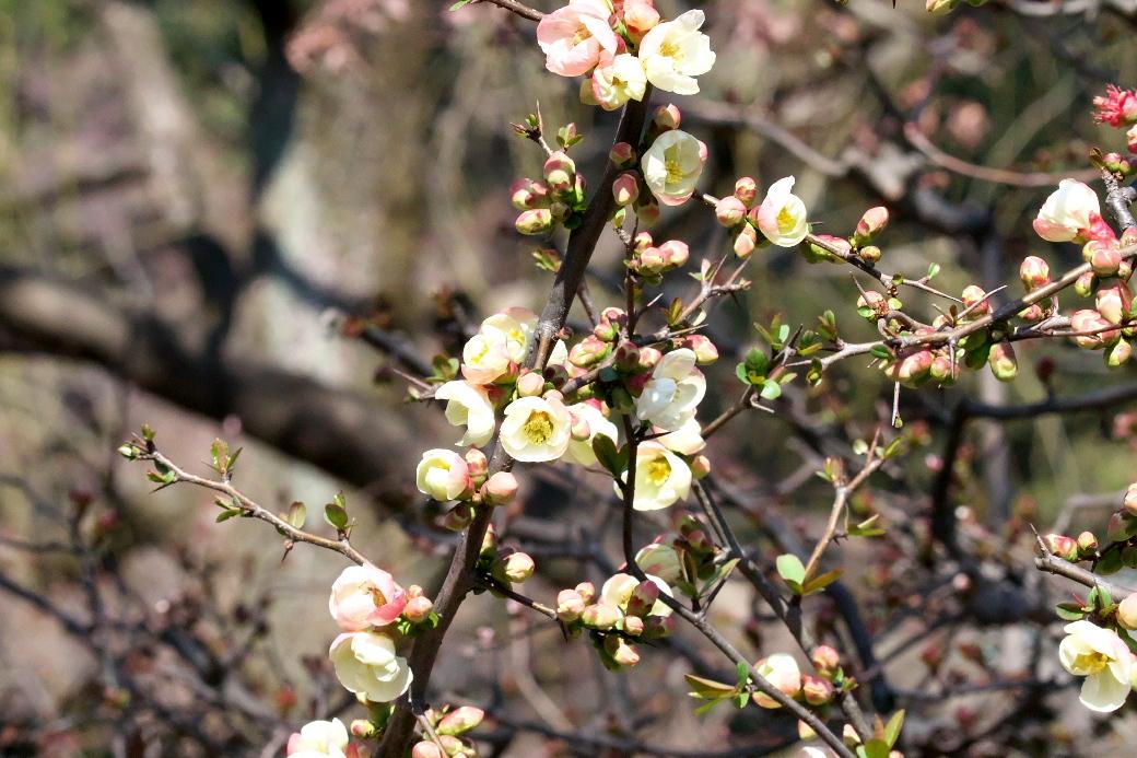 咲いていた花などの一部_2