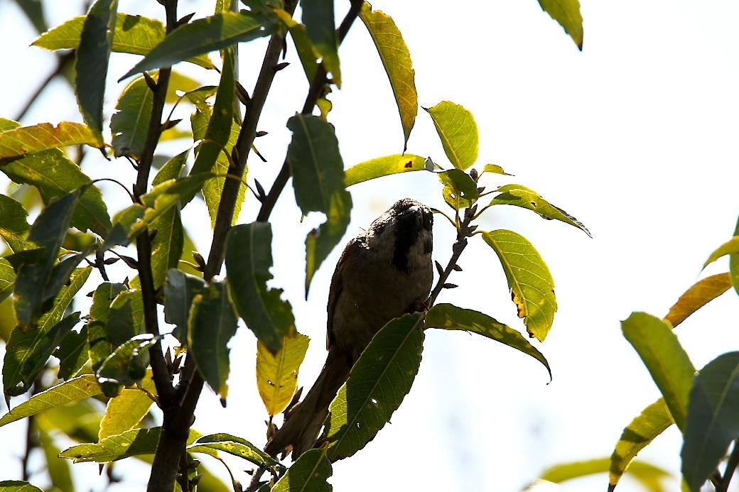 何の鳥?_1