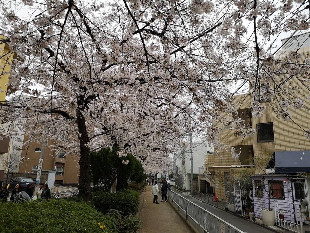 一昨日(30日)の桜_タブレット