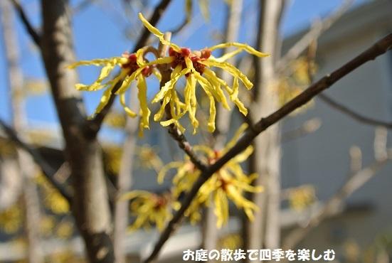 mansaku46.jpg