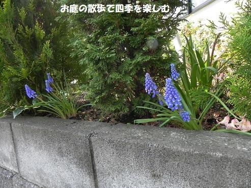 musukari18_20190331091345b7f.jpg