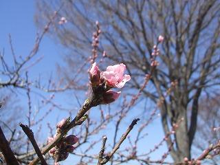 2019.03.24【春の花】 (3)