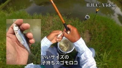 スゴモロコ入れ食い(YouTubeムービー)