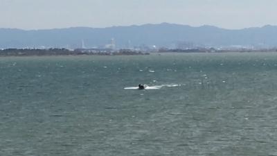 南風で大荒れ続く琵琶湖!! サクラはどんどん咲いてますよ〜(YouTubeムービー)