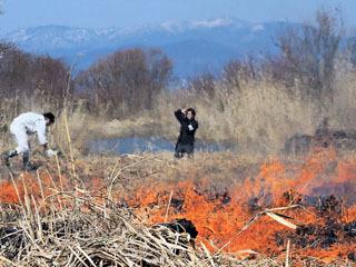 針江湖岸で行われたヨシ焼き