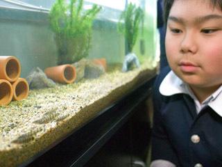 滋賀大付属小に引き渡されたアユモドキを観察する生徒