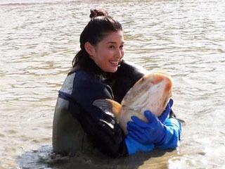 「池の水ぜんぶ抜く」で捕獲されたハクレン