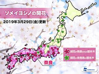 ソメイヨシノの開花(3月29日現在)