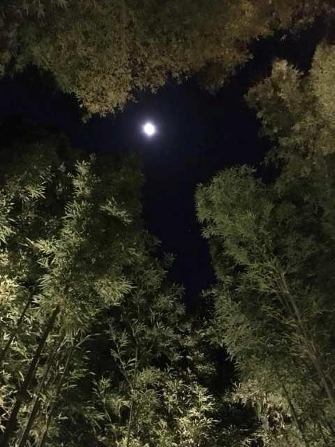 見上げると、綺麗なお月さま🌙