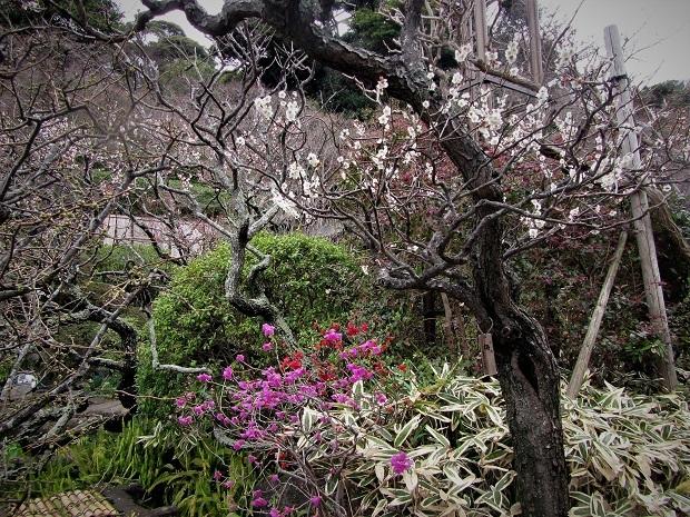 19.3.7 鎌倉ハイク②回目 (170)
