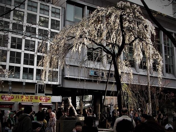 渋谷スクランブル交差点  (26)