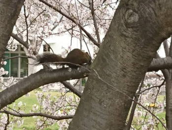 20190401squirrel.jpg