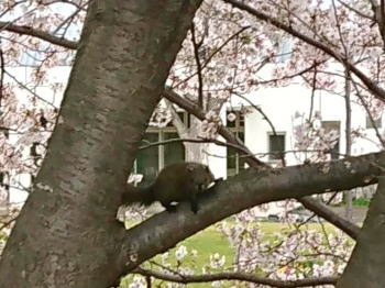 20190401squirrel1.jpg