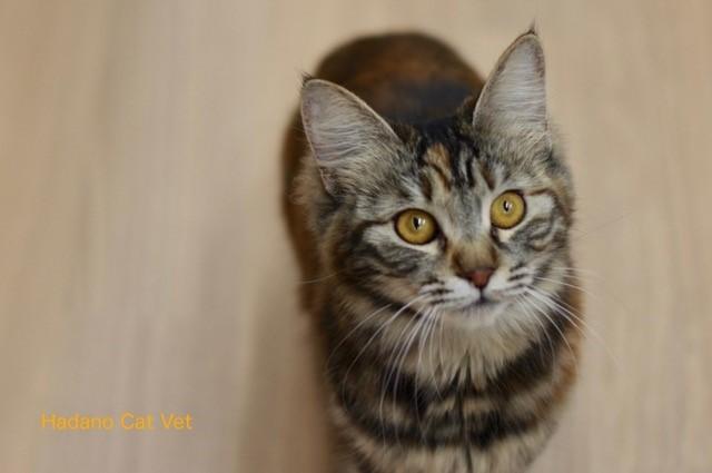 Cat Vet1