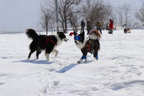 s-2019223白馬de雪あそび_190228_0184