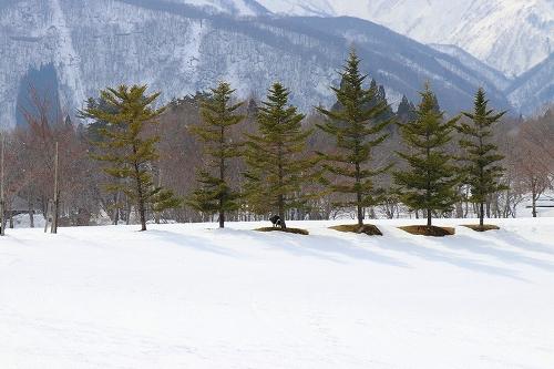 s-2019223白馬de雪あそび_190228_0349